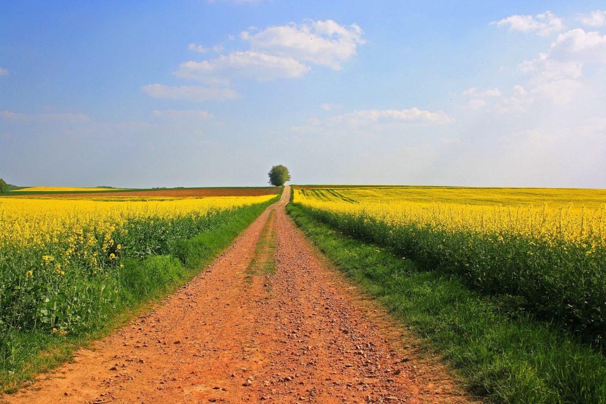 strada Francigena