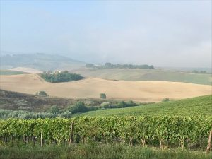 cantine vinicole valle d'Orcia