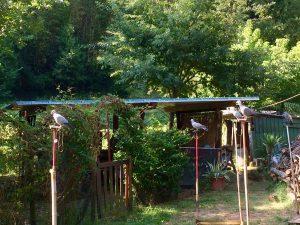 allevamento piccioni