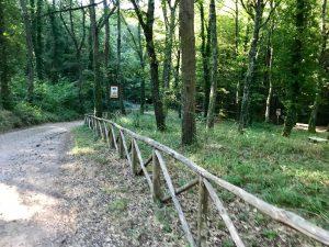 montefiascone bosco